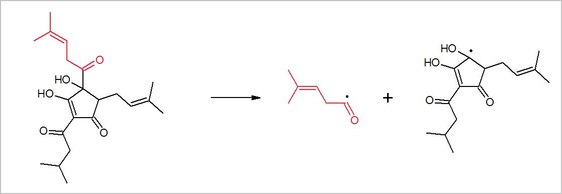 Isohumulone forming radicals