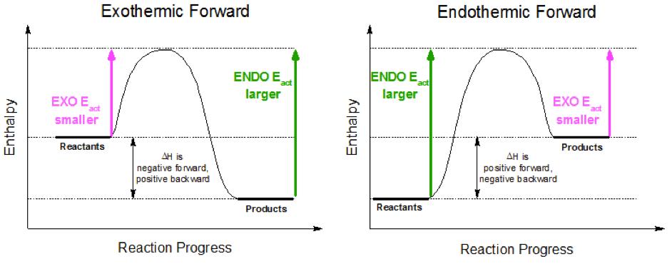 ENDO always has higher Ea